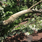wind-damage-1